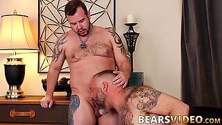 Медвед ужива у сисању кита пре него што је узме у бутингу
